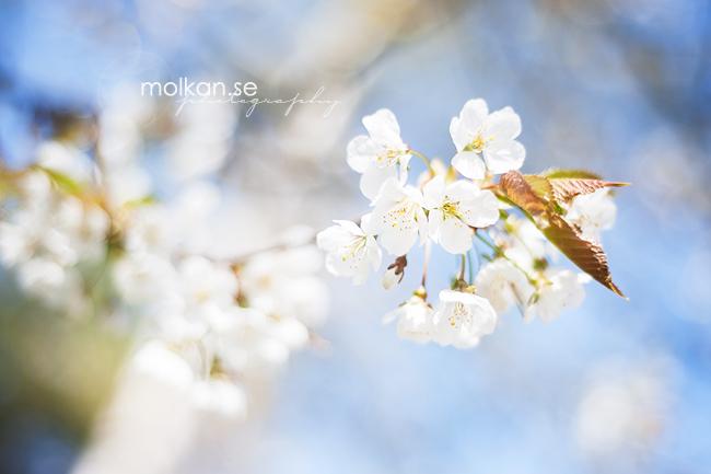 malhar_140428_0031